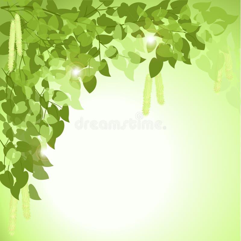 Κλάδος ενός δέντρου σημύδων με τα φύλλα απεικόνιση αποθεμάτων