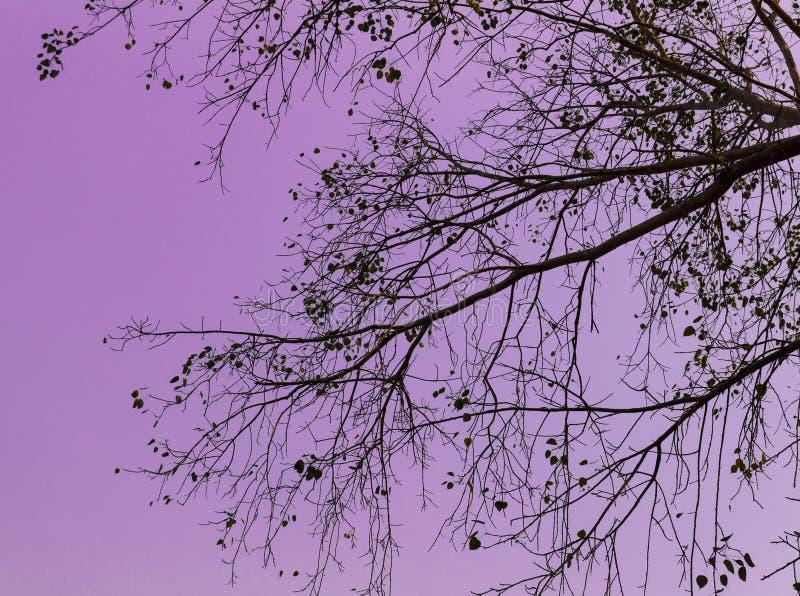 Κλάδος και φύλλα με τον πορφυρό ουρανό για το υπόβαθρο στοκ εικόνες