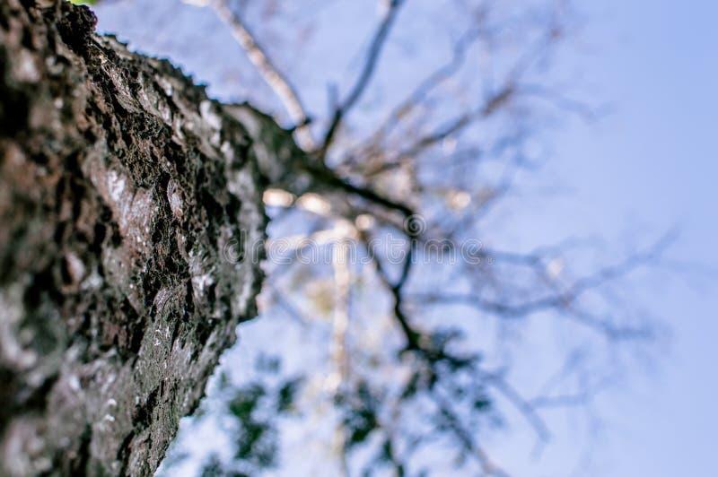 Κλάδος και φλοιός του δέντρου - που ανατρέχει στοκ εικόνες