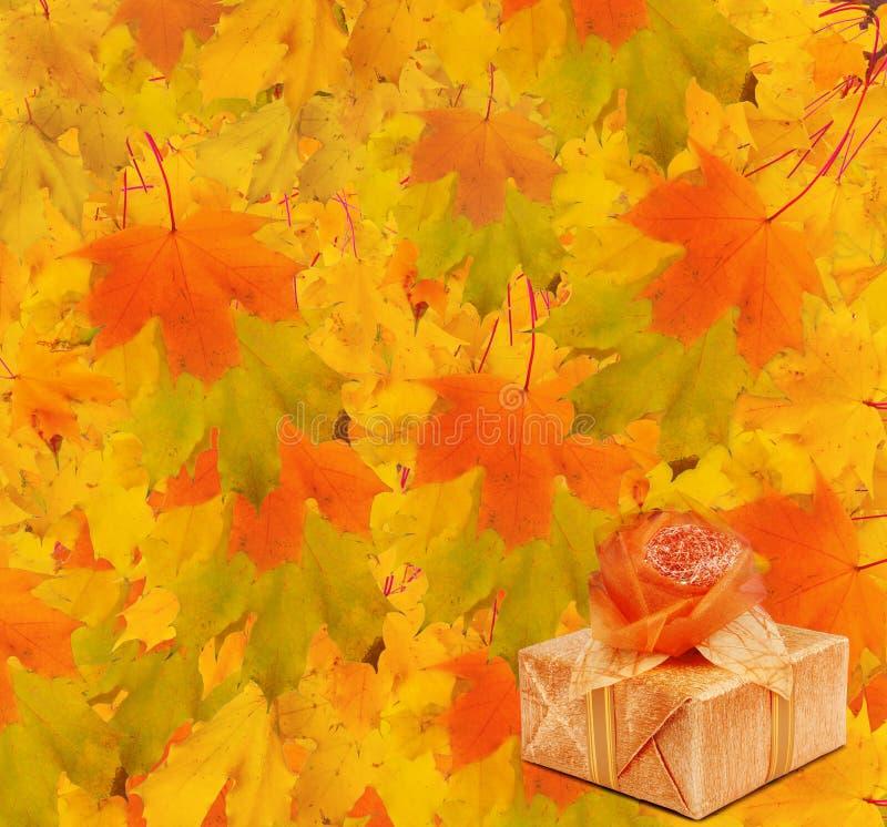 Κλάδος σφενδάμνου φθινοπώρου με το κιβώτιο δώρων στοκ εικόνες