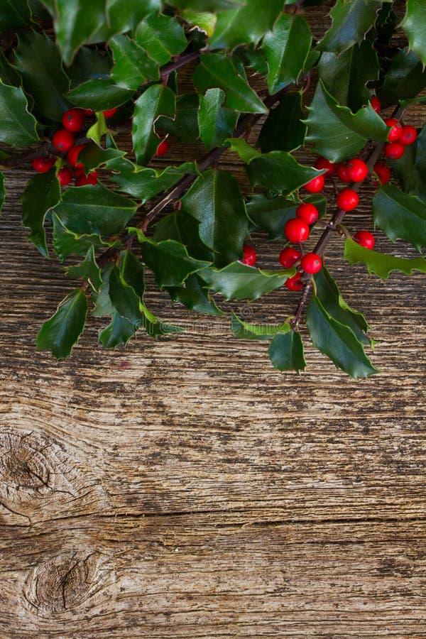 Κλάδος της Holly στο ξύλο στοκ εικόνες με δικαίωμα ελεύθερης χρήσης