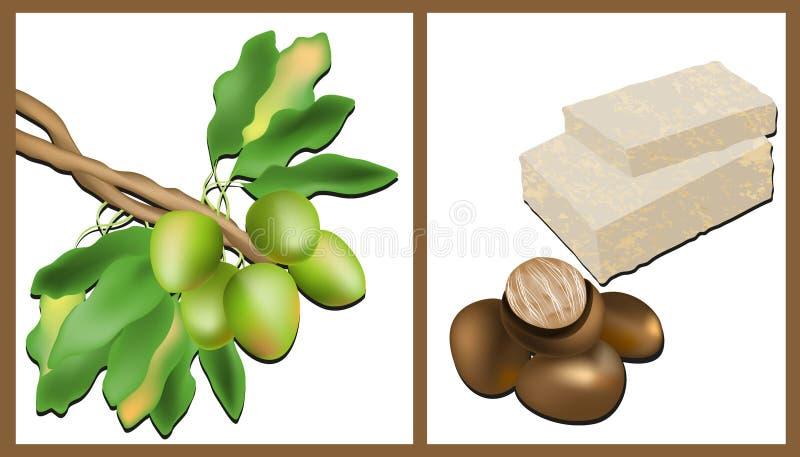 Κλάδος του δέντρου του Shea, καρύδια του Shea και βούτυρο του Shea διανυσματική απεικόνιση