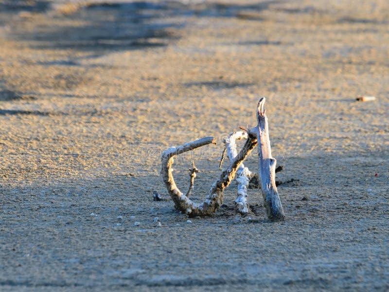 Κλάδος του ξύλου στην άμμο στοκ εικόνες