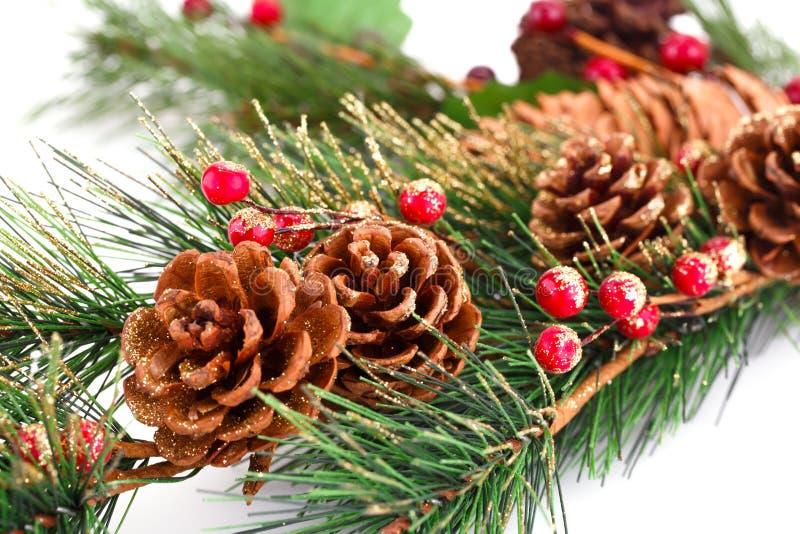 Κλάδος χριστουγεννιάτικων δέντρων στοκ εικόνες