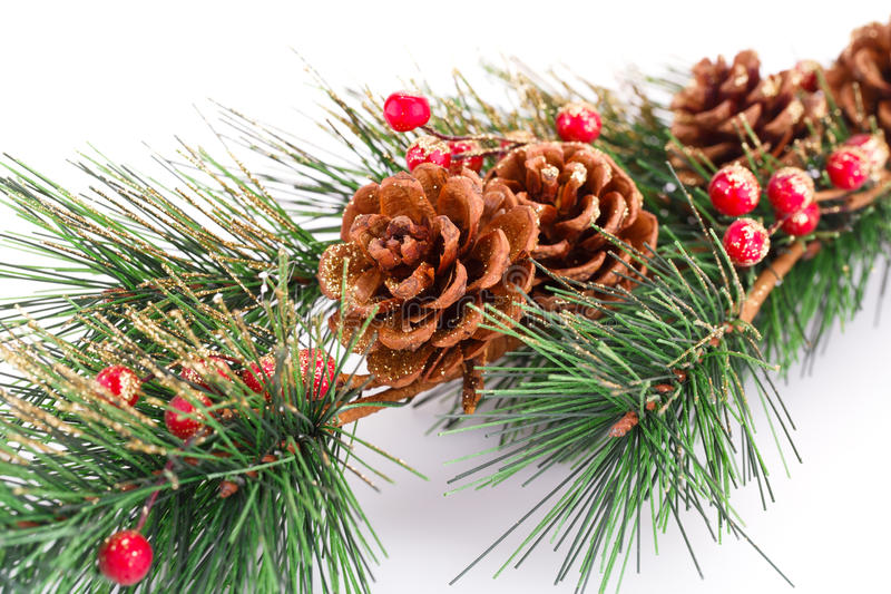 Κλάδος χριστουγεννιάτικων δέντρων στοκ εικόνα