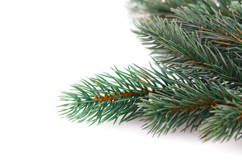 Κλάδος χριστουγεννιάτικων δέντρων στοκ φωτογραφίες