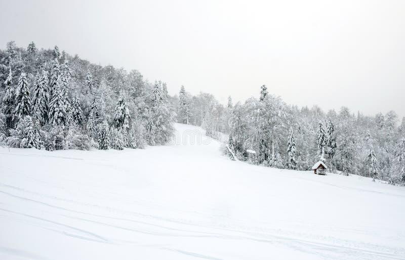Κλίσεις σκι στο κωνοφόρο δάσος «σε Kolasin 1450» βουνό s στοκ φωτογραφία με δικαίωμα ελεύθερης χρήσης