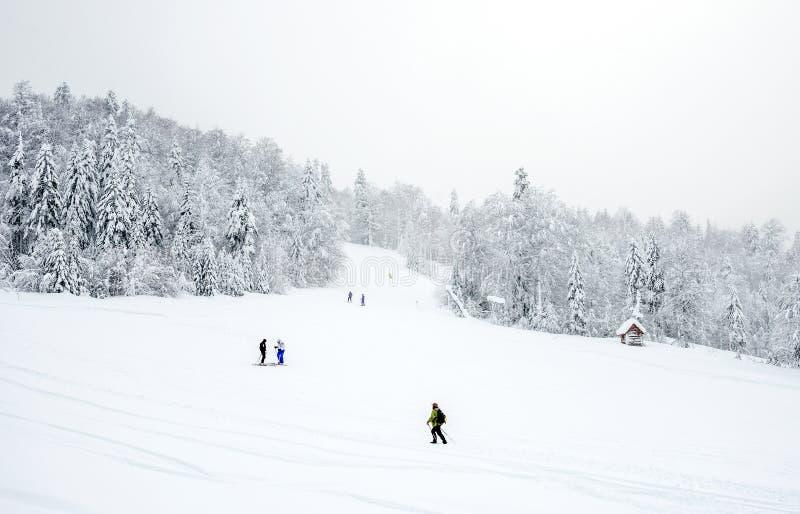 Κλίσεις σκι στο κωνοφόρο δάσος «σε Kolasin 1450» χιονοδρομικό κέντρο βουνών στοκ εικόνα