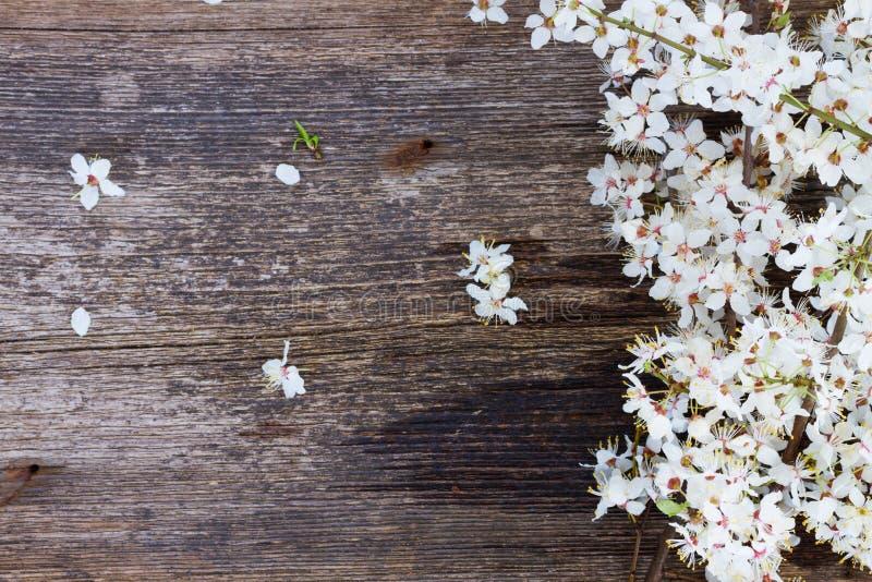 Κλαδίσκοι με τα ανθίζοντας λουλούδια στοκ εικόνες με δικαίωμα ελεύθερης χρήσης