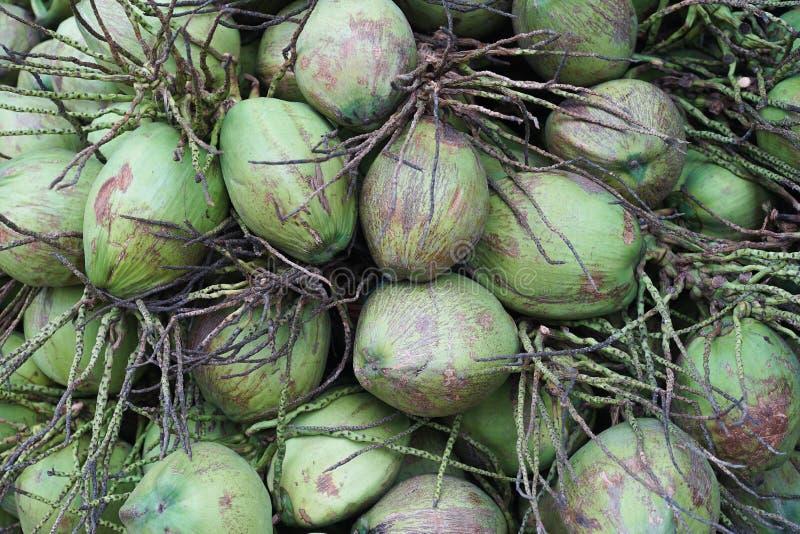 Κλείστε επάνω μια ομάδα πράσινων φρούτων καρύδων, ύφος εικόνων χρώματος φύσης, σύσταση της καρύδας, υπόβαθρο καρύδων στοκ εικόνες