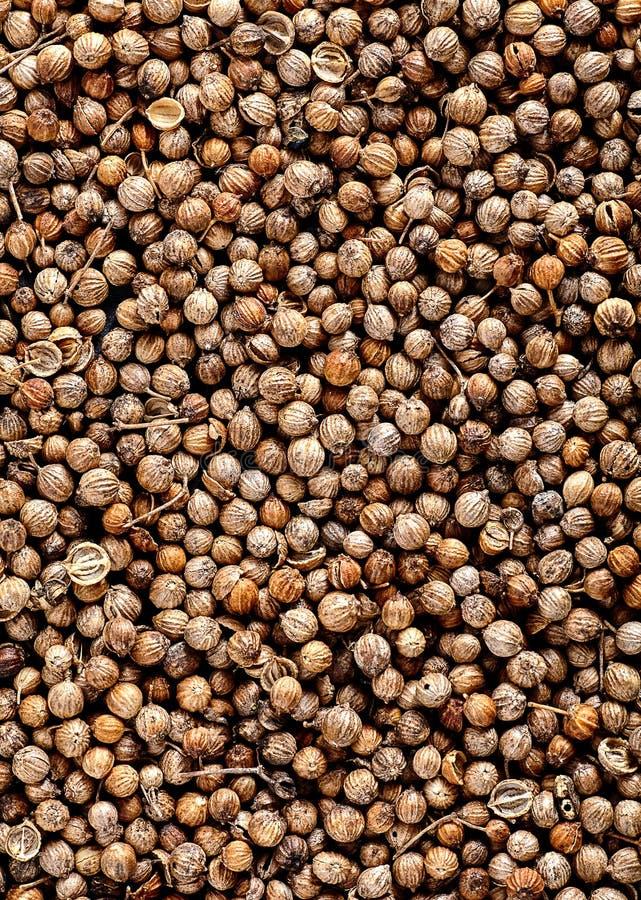 Κλείστε επάνω πολλών οργανικών ξηρών σπόρων Coriandrum κορίανδρου sativum στοκ φωτογραφία