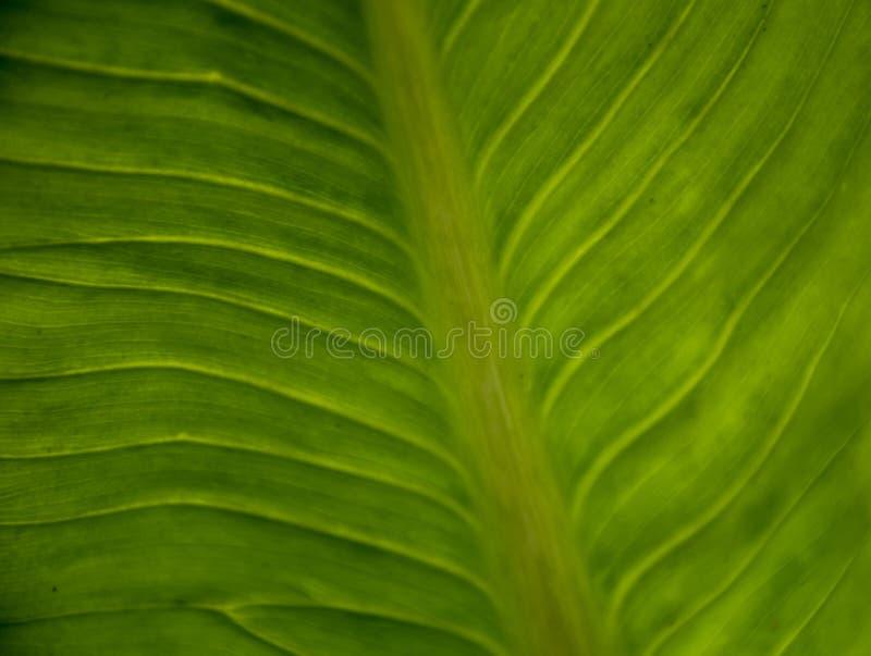Κλείστε επάνω την πράσινα σύσταση/το υπόβαθρο φύλλων Αφηρημένη μακροεντολή στοκ εικόνες με δικαίωμα ελεύθερης χρήσης