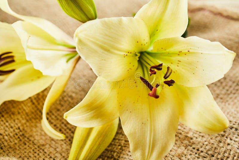 Κλείστε επάνω της άνθισης λουλουδιών πέρα από burlap το υπόβαθρο στοκ φωτογραφία