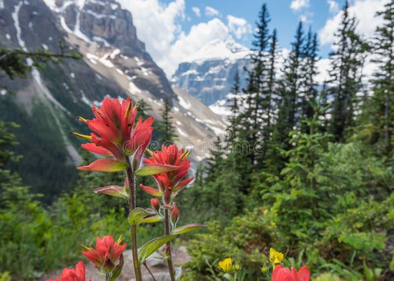 Κλείστε επάνω της ινδικής βούρτσας χρωμάτων ενάντια στα χιονώδη βουνά στοκ φωτογραφίες με δικαίωμα ελεύθερης χρήσης