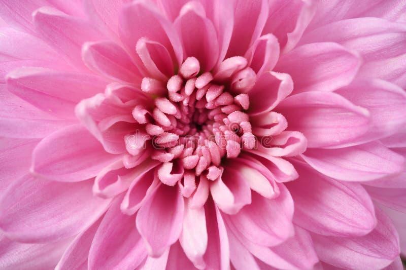 Download Κλείστε επάνω της ντάλιας λουλουδιών για το υπόβαθρο Στοκ Εικόνα - εικόνα από λεπτομέρεια, καθαρίστε: 62714399