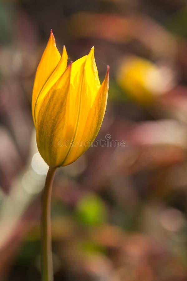 Κλείστε επάνω τη μακροεντολή του φωτεινού κίτρινου λουλουδιού στοκ φωτογραφίες με δικαίωμα ελεύθερης χρήσης