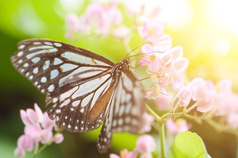 Κλείστε επάνω τη σκούρο μπλε πεταλούδα στοκ φωτογραφία