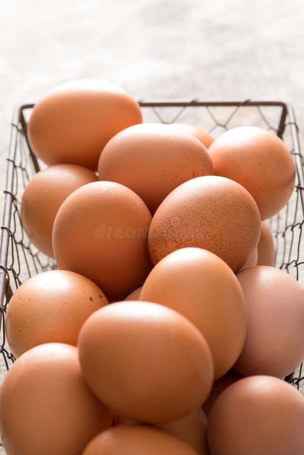 Κλείστε επάνω του δίσκου καλωδίων κοτόπουλου που γεμίζουν με τα καφετιά αυγά στοκ φωτογραφία με δικαίωμα ελεύθερης χρήσης