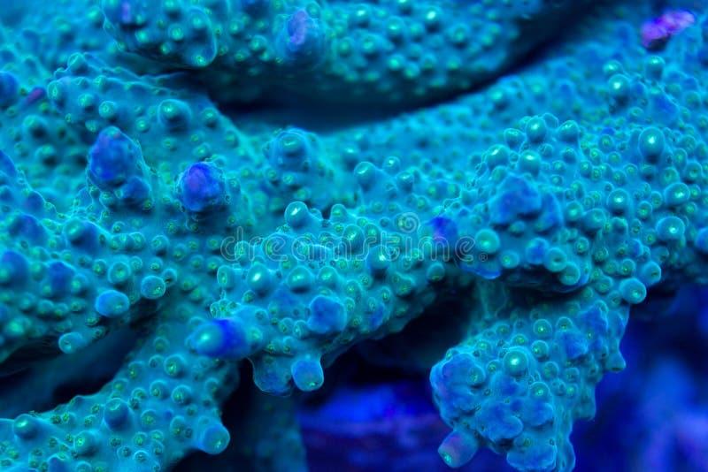 Κλείστε επάνω του κοραλλιού polyps στοκ φωτογραφία