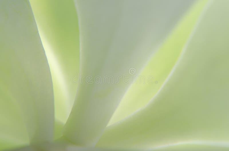 Κλείστε επάνω του φύλλου στοκ εικόνα