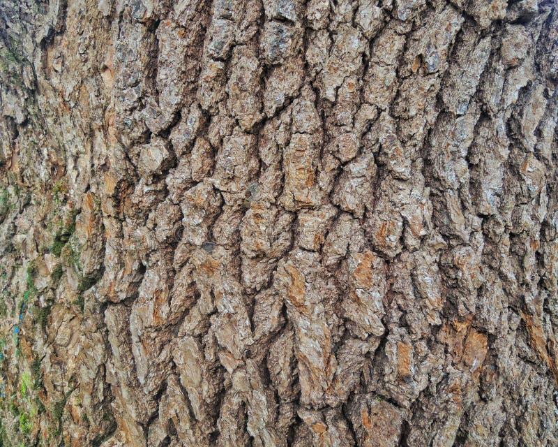Κλείστε επάνω του φλοιού ενός δέντρου σε ένα πάρκο στοκ φωτογραφίες