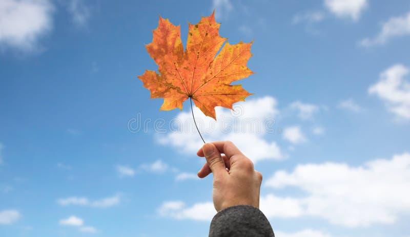 Κλείστε επάνω του χεριού με το φύλλο σφενδάμου φθινοπώρου πέρα από τον ουρανό στοκ εικόνα
