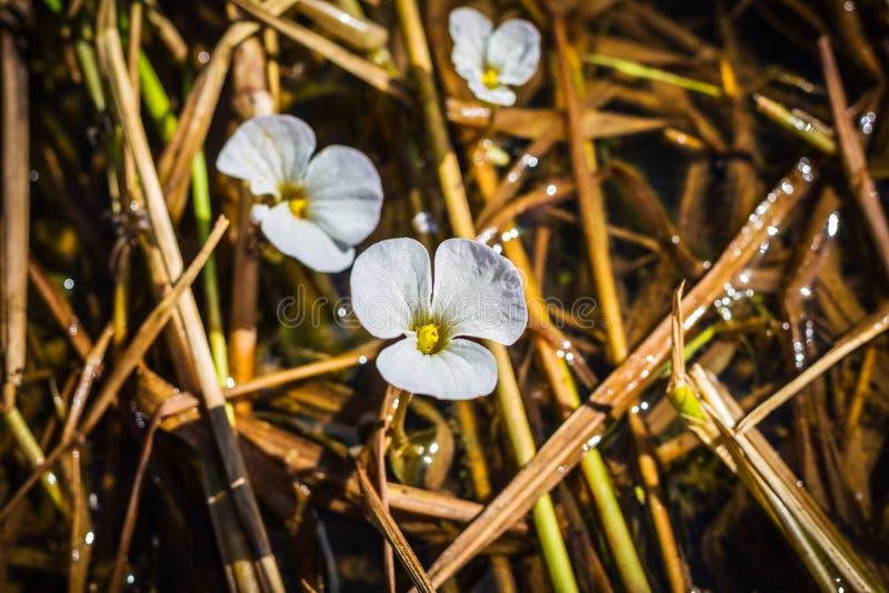 Κλείστε επάνω το τροπικό άσπρο λουλούδι στοκ φωτογραφία με δικαίωμα ελεύθερης χρήσης