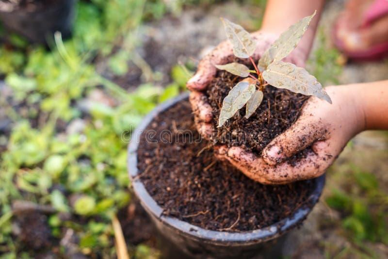 Κλείστε επάνω το χέρι των παιδιών που κρατούν τις εγκαταστάσεις και το χώμα στοκ εικόνα με δικαίωμα ελεύθερης χρήσης