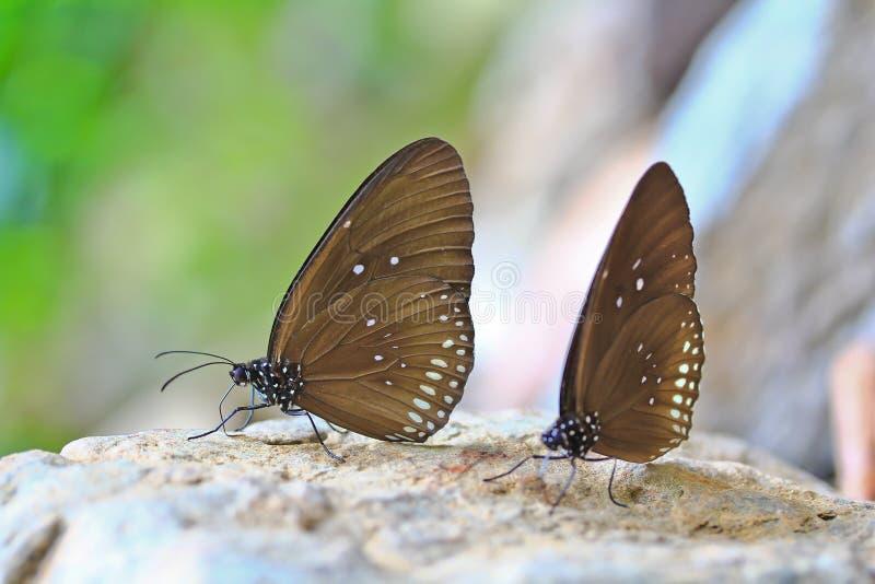 Κλειστός επάνω της πεταλούδας στοκ εικόνα με δικαίωμα ελεύθερης χρήσης