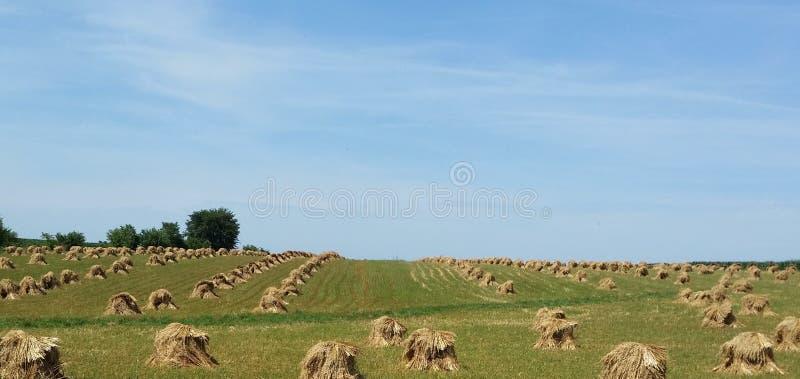 Κλονισμοί αγροτικών βρωμών Amish το καλοκαίρι στοκ φωτογραφία με δικαίωμα ελεύθερης χρήσης