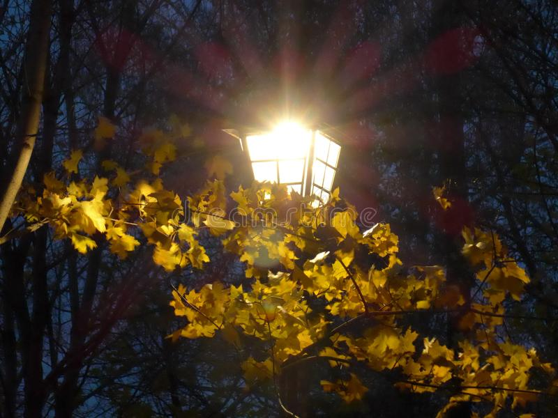 Λάμποντας φανάρι στα φύλλα φθινοπώρου στοκ φωτογραφία