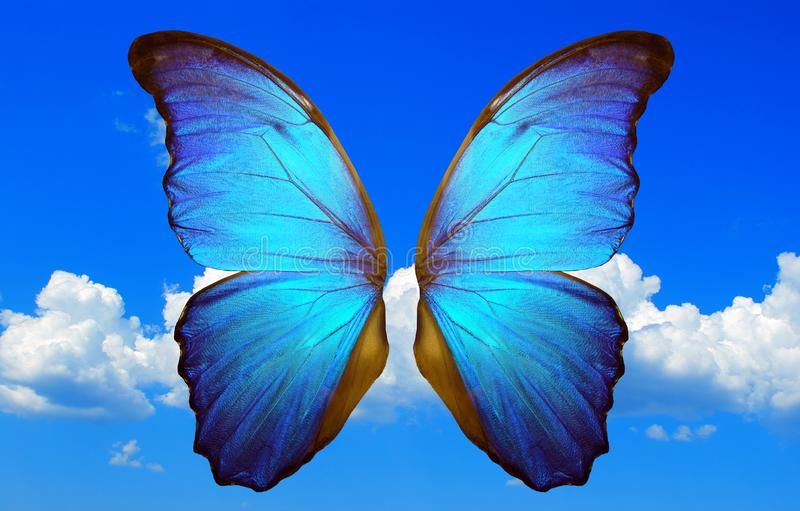Λάμποντας φτερά μιας μπλε πεταλούδας morpho σε ένα υπόβαθρο του μπλε ουρανού με τα σύννεφα στοκ φωτογραφία