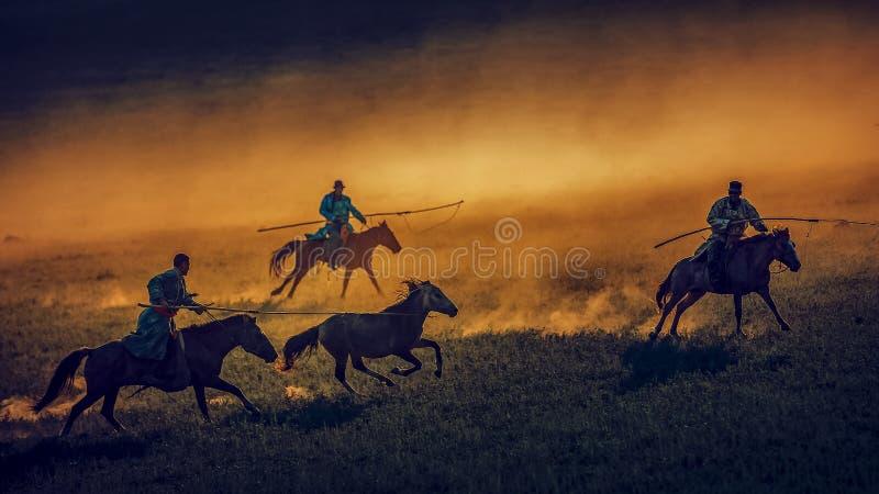 Λάσο ένα άλογο στοκ φωτογραφίες με δικαίωμα ελεύθερης χρήσης