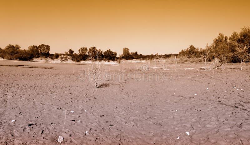 λάσπη λιμνών σπορείων στοκ φωτογραφίες με δικαίωμα ελεύθερης χρήσης