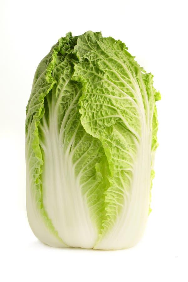λάχανο κινέζικα στοκ εικόνα