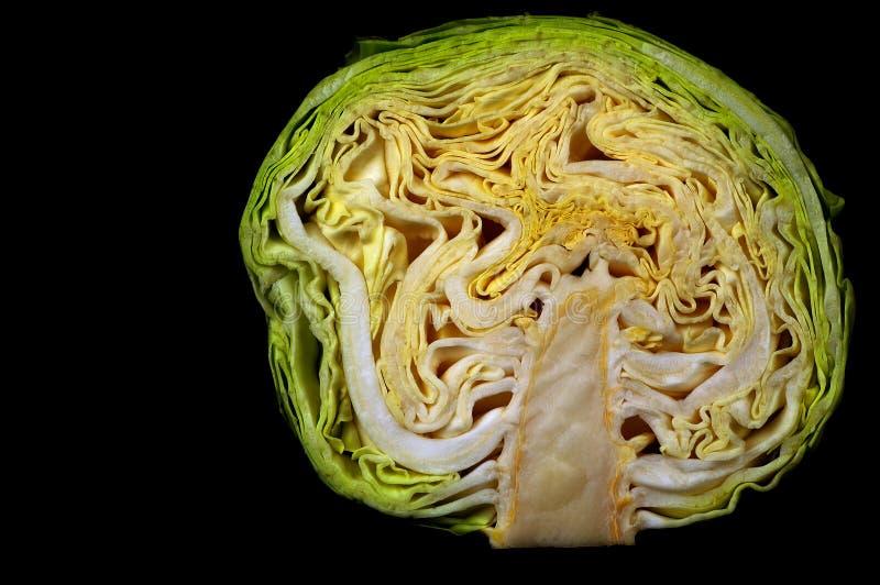 λάχανο στοκ φωτογραφία με δικαίωμα ελεύθερης χρήσης