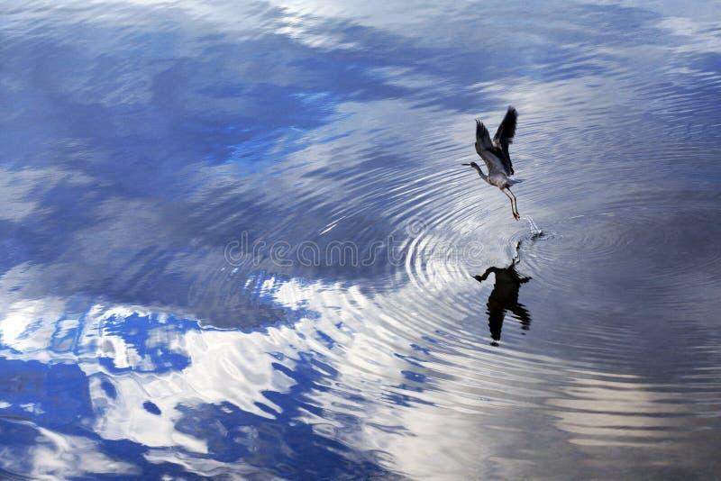 λήψη πτήσης πουλιών στοκ φωτογραφία με δικαίωμα ελεύθερης χρήσης
