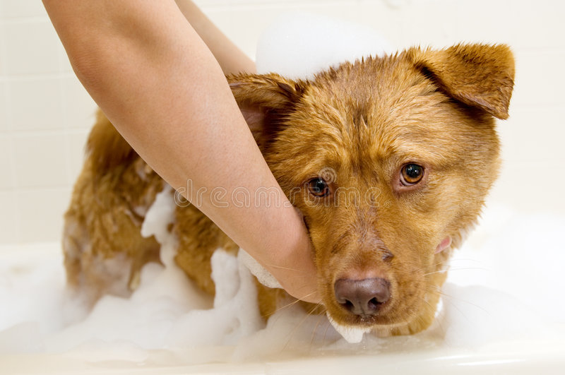 λήψη σκυλιών λουτρών στοκ εικόνα με δικαίωμα ελεύθερης χρήσης