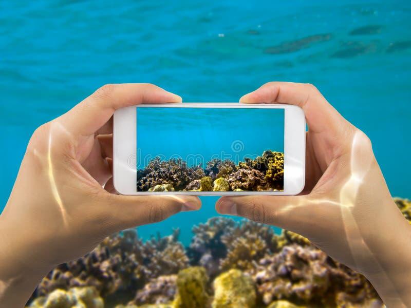 Λήψη της φωτογραφίας κάτω από τη Ερυθρά Θάλασσα στοκ εικόνες