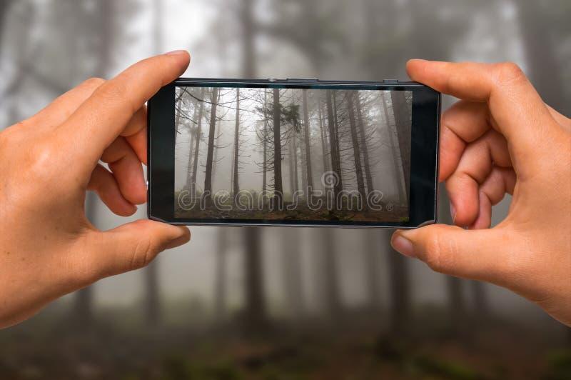 Λήψη της φωτογραφίας της ομίχλης στο συχνασμένο δάσος με το κινητό τηλέφωνο στοκ εικόνες