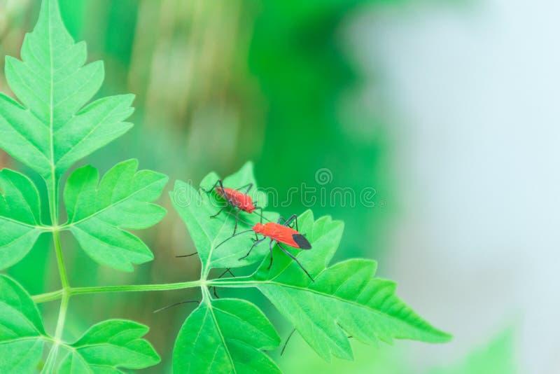 Λήψη των εντόμων στη χλόη μπροστά από το σπίτι στοκ φωτογραφία