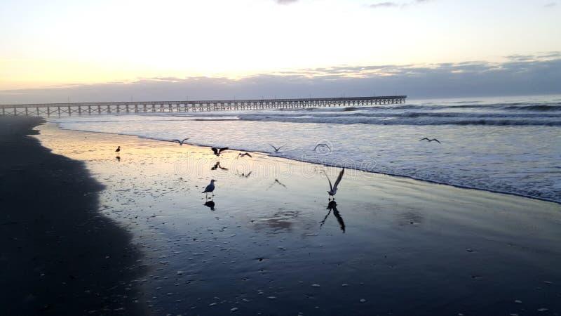 Λήψη Seagulls πτήσης στο άλσος κερασιών στοκ φωτογραφίες