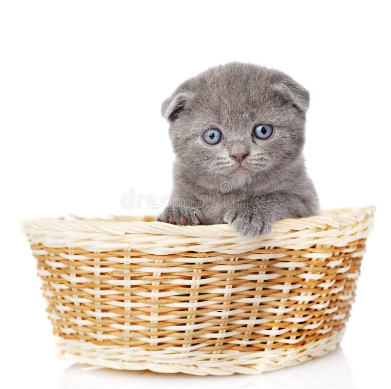 Λίγη βρετανική συνεδρίαση γατακιών shorthair στο καλάθι στο W στοκ φωτογραφίες με δικαίωμα ελεύθερης χρήσης