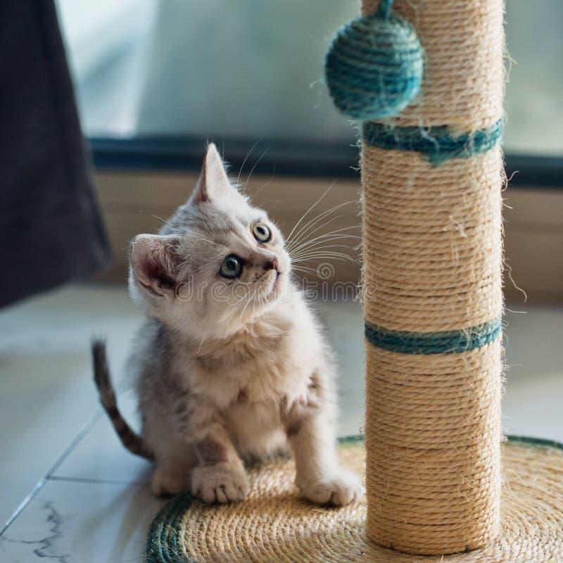 Λίγη γάτα που παίζει μια σφαίρα στοκ φωτογραφίες με δικαίωμα ελεύθερης χρήσης