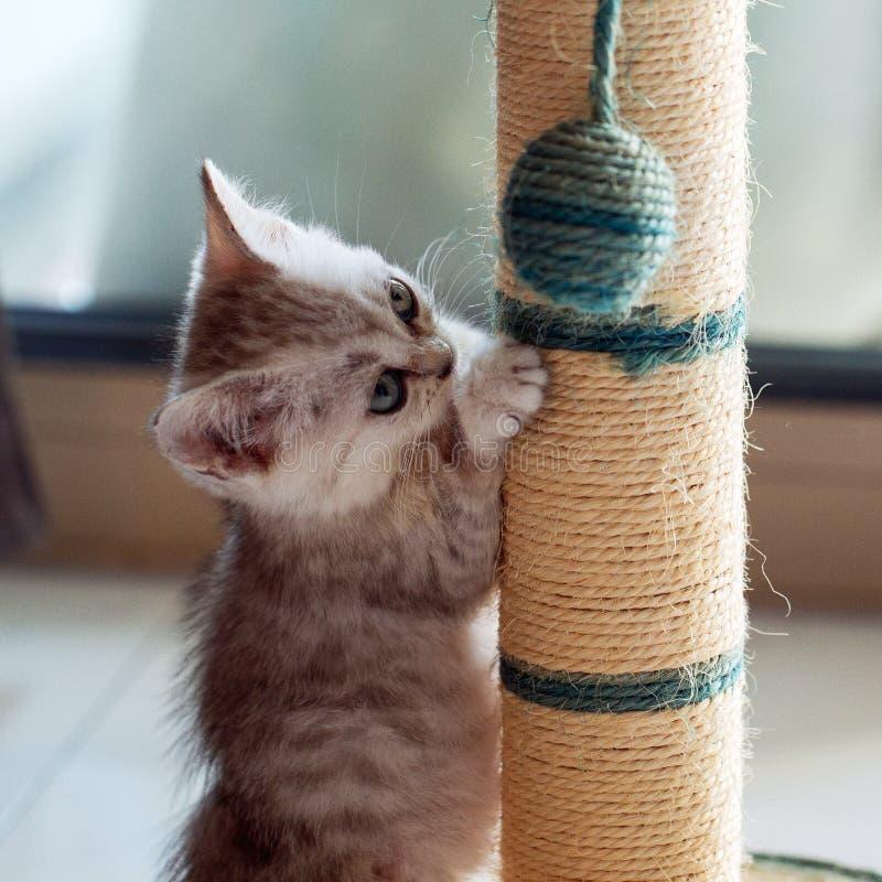 Λίγη γάτα που παίζει μια σφαίρα στοκ εικόνες