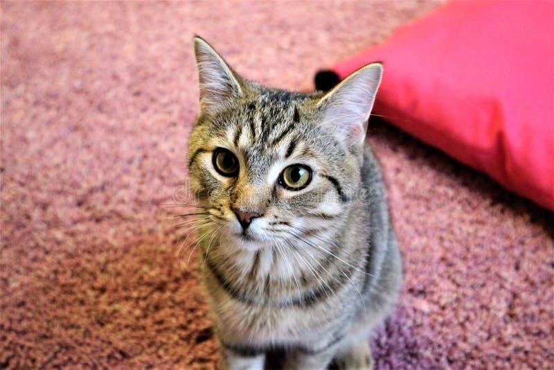 Λίγη χαριτωμένη συνεδρίαση γατακιών στο πάτωμα στοκ εικόνες