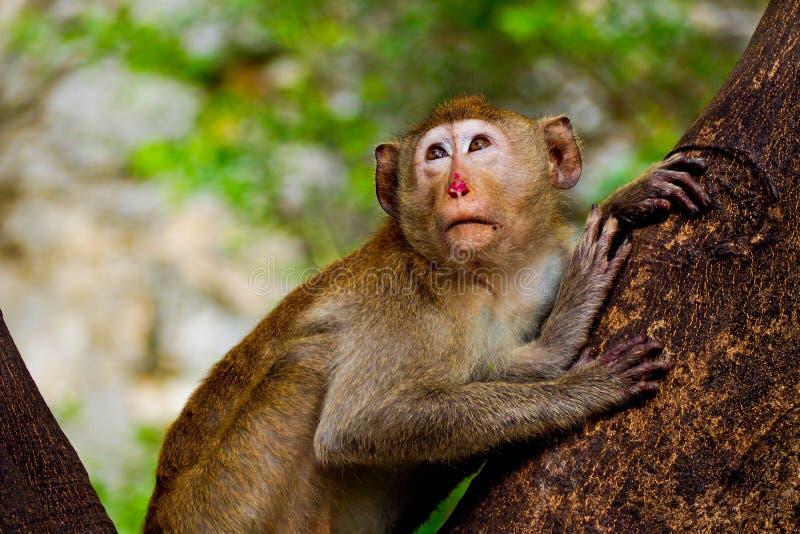 Λίγος πίθηκος στη ζούγκλα στοκ εικόνες