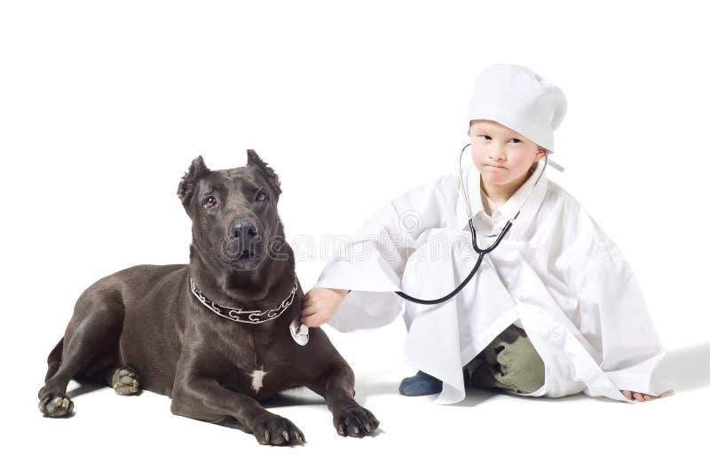 Λίγος σοβαρός κτηνίατρος ακούει το σκυλί στοκ εικόνες με δικαίωμα ελεύθερης χρήσης