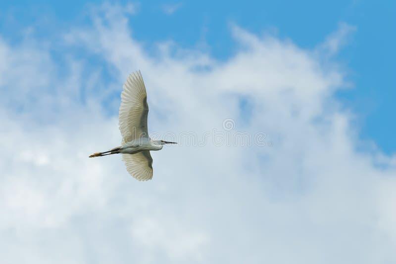 Λίγος τσικνιάς κατά την πτήση στο νεφελώδη ουρανό στοκ φωτογραφίες με δικαίωμα ελεύθερης χρήσης