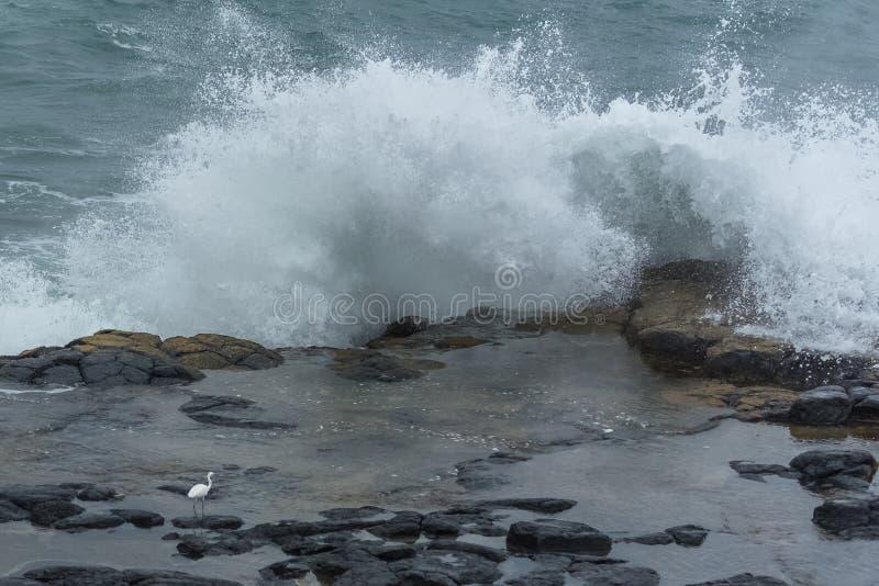 Λίγος τσικνιάς μπροστά από τα μεγάλα κύματα στοκ φωτογραφία